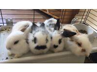 4 baby rabbits