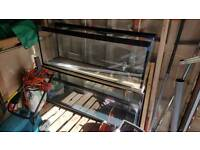 2 x 4 foot fish tanks on a double stand