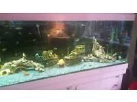 7ft fish tank full set up