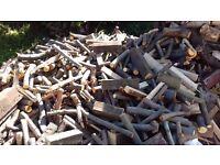 Laurel tree logs