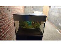 Fish tank,