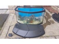 Rena Panorama aquarium with filter, heater and loads of extras/supplies for fish tank