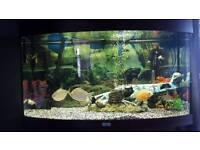 Juwel 3ft 180l bow front fish tank aquarium