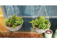 Grey wicker hanging baskets and plants