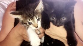 10 beautiful kittens for sale