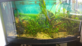 fluval vincenza 180 bow front tank full set up and jewel rio 180 tank