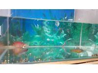 3 african cichlids and 1 parrot fish
