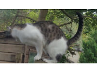 MISSING/LOST CAT IN HEADINGTON GYPSY LANE AREA