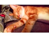 11week old kitten