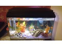 Glass fish tank with accessories, 15+ ornaments and 20+ fish