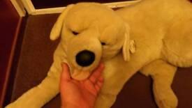 Large Cuddles Time dog