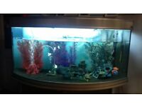 4 foot fish tank with everything you need also comes with fish