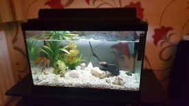 fish tank with table, food, fish, drops......