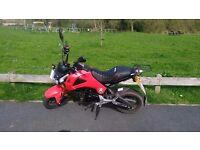 Honda MSX 125cc (Grom) - Only 1200 miles