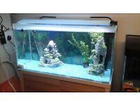 Fluval roma 175 litres fish tank cabinet