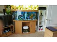 Bow front 5ft fish tank including everything