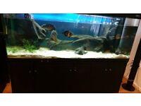 Fish tank 7 ft .