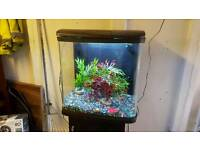 Fish tank with Black cabinet fishtank aquarium Calverton Nottingham