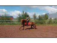 Exercise rider available