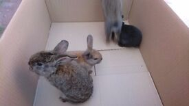 5 Cute and friendly rabbits for sale....