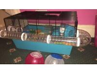 Two cute hamsters with cage and supplies quick sale bargain price !