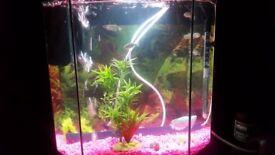 Fish tank ideal begginners