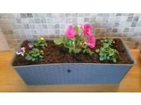 Flower in planters