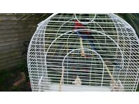 Male crimson female stanley forsale with large cage £150