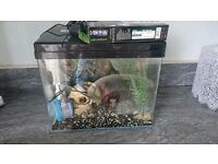 Juwel 28 litre tropical fish tank full set up