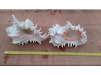 Large Coral Ornaments for Aquarium or External use