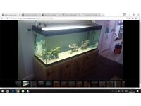 5ft fish tank and unit