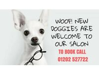 Appoitments available at Cherished Pets dog grooming salon