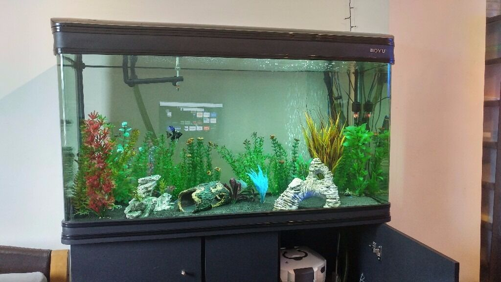 300L Cabinet Fish Tank (123cm 4ft) Full setup with filter, fish ...