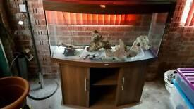 260 litre jewel vision fish tank