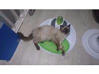 *** CAT WELLNESS CENTRE *** CATIT