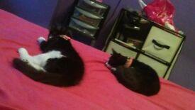 lovley 2 kitten