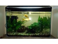 2 rescue comet goldfish for FREE...have tumours but otherwise healthy. Looking for a samaritan