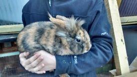 Gorgeous friendly male rabbit