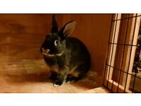 Young beautiful rabbit and hutch, travel carry, bedding, food for sale