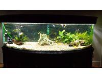 Fish tank 600 liters