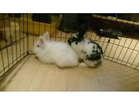 Rabbits for sale with cage!