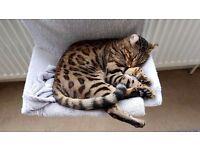 Missing Cat Putney £500 Reward