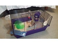 Well-Handled Hamster for Sale