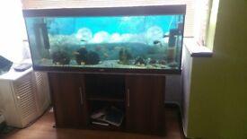 5foot rio juwel fish tank.
