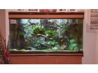 Boyu 400ltr Tropical Aquarium