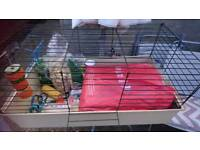 Guinea pig cage with everything