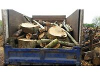 Unprocessed seasoned logs,cordwood, timber, firewood