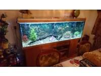 Large Fish Tank (reduced price)