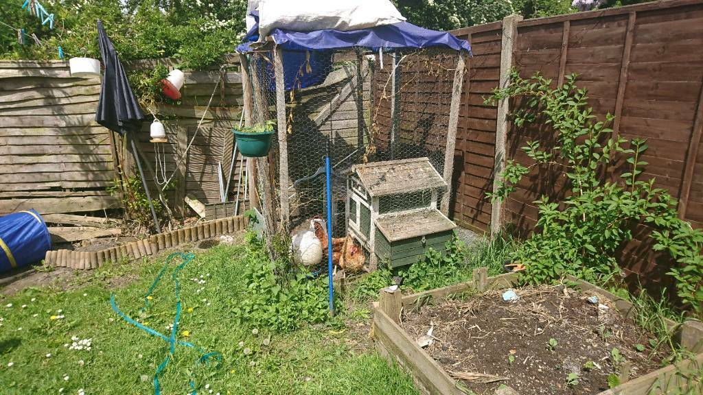 Chicken coop and three chickens for sale