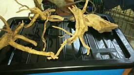 Azealea root/bogwood